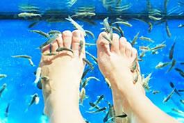 Welcome to tettra aquarium for Garra rufa fish pedicure locations